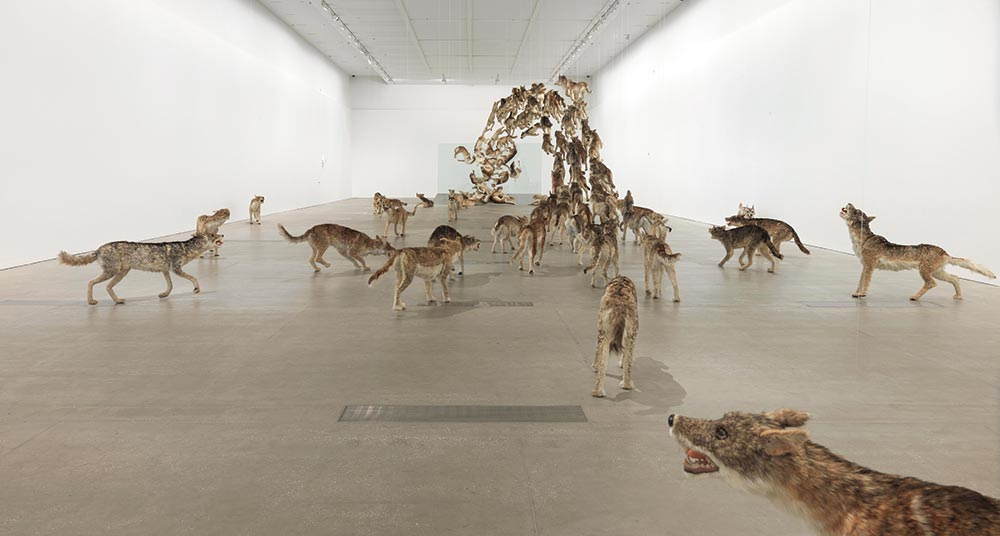 Head on 2006, 99 life-sized replicas of wolves and glass wall, Installed dimensions variable. Photo is a Courtesy of Queensland Art Gallery, Gallery of Modern Art.