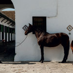 Emilio Ale González with broodmare Campanera LV (1999) Young Spanish Champion at SICAB 2003 and curious foal