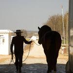 Javier Fuentes Muñiz with horse Victorioso XIV (2003)