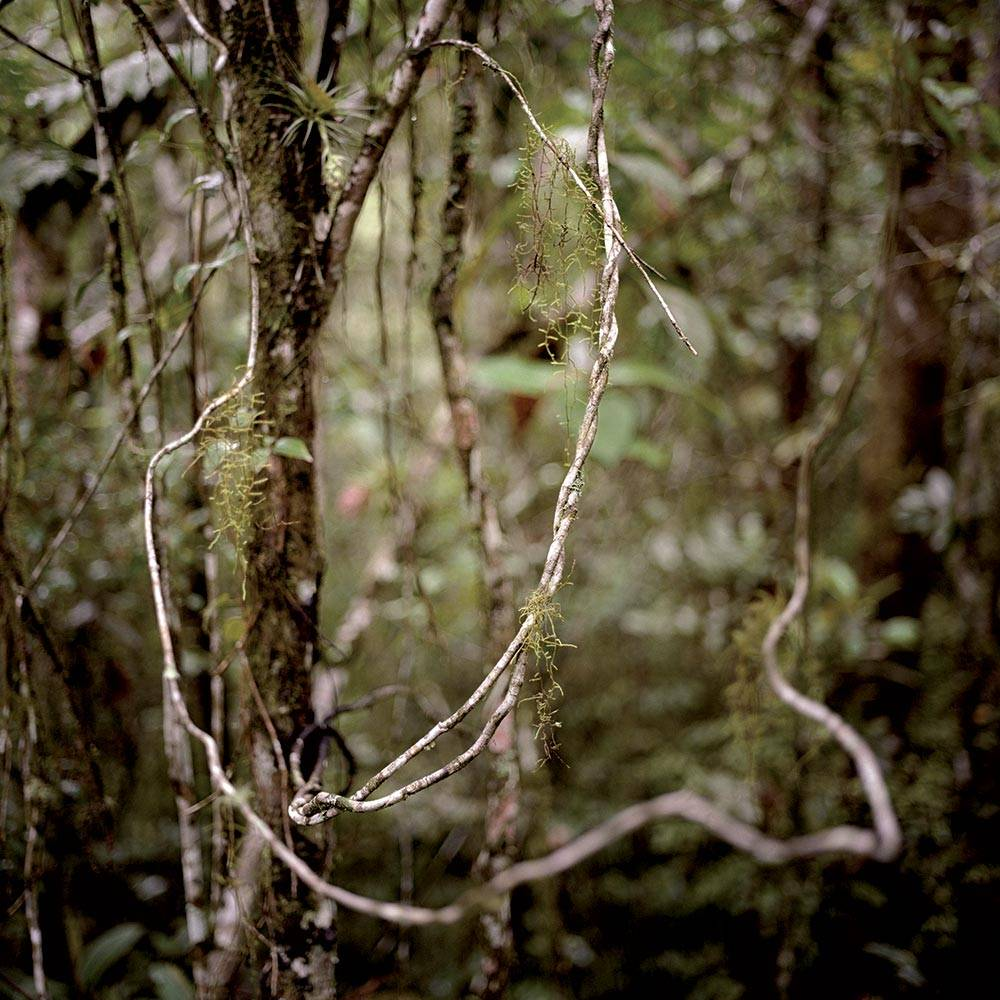 Virgin Forest 2009 Chromogenic print, © Mona Kuhn, Courtesy of the artist and Flowers Galleries
